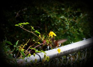 Matthew 7-11  Hummingbird